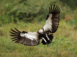 Vulture Awareness