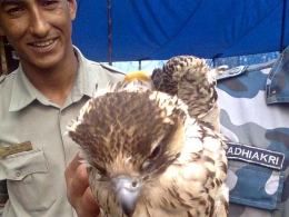 Raptor Trafficking Research