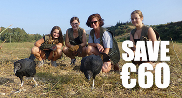 Bird of Prey Experience - Save €60